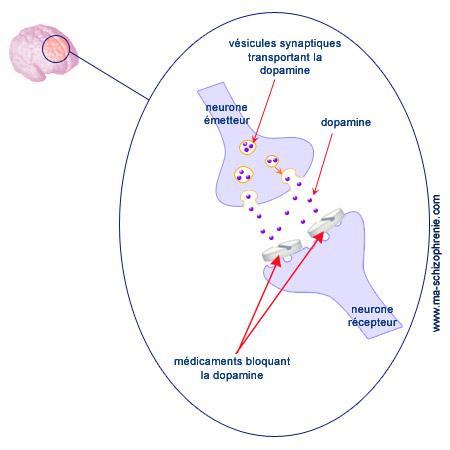 Cerveau schizophrénique : dysfonctionnements dopaminergiques et d'autres composés chimiques