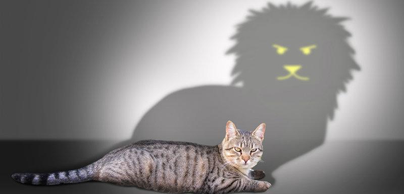 Schizophrénie et violence, quel risque?