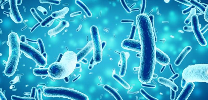 La transplantation de microbiote fécal dans la schizophrénie
